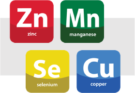 illustration showing trace minerals